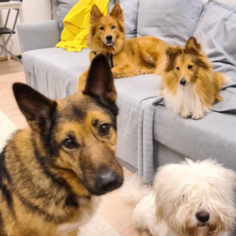 Koiraparkki.com Rastilan alueen koirahoitola