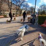 Päiväretkiä koirien kanssa