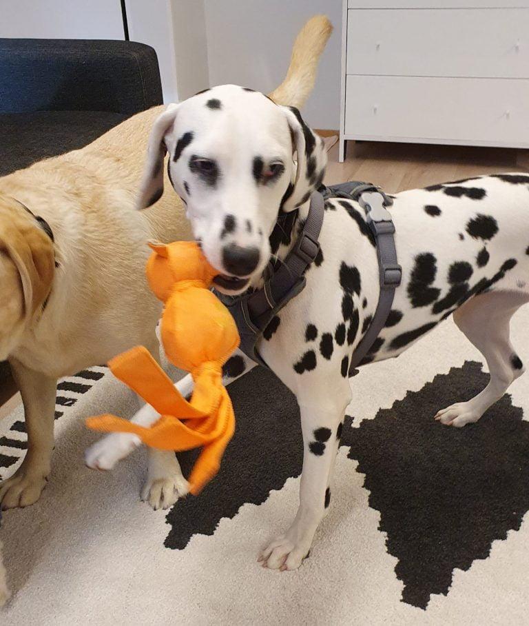 koiraparkki vuosaari päivähoito koiralle