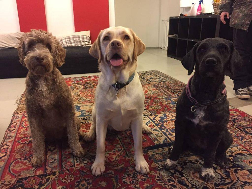 koiraparkki.com koirapäivähoito