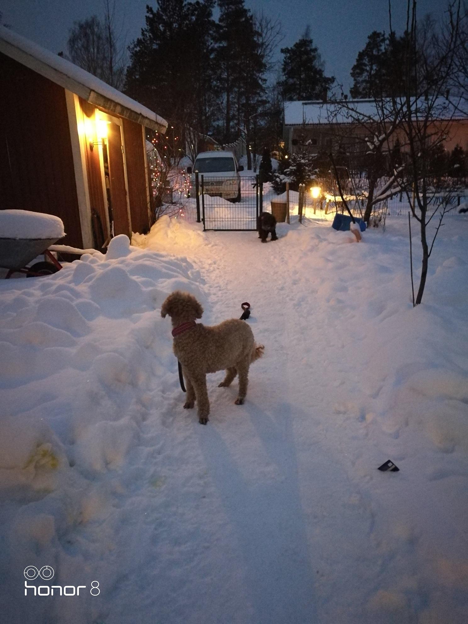 paras majoitus koirallesi koirahotelli perro