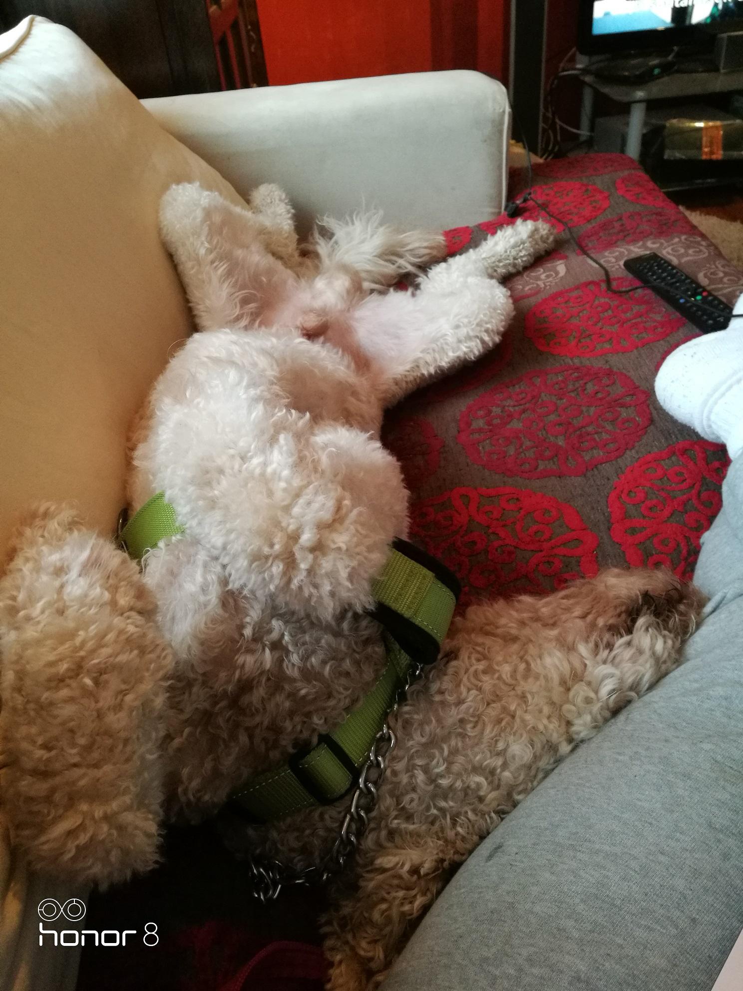 Koirahotelli Perro nukutaan ketarat ojossa