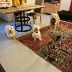 Koirapäiväkoti aula