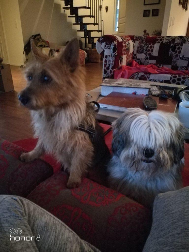 koirapäiväkoti espoo koiraparkki.com