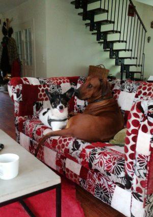 Koirahotelli Perro nukutaan kavereiden vieressä