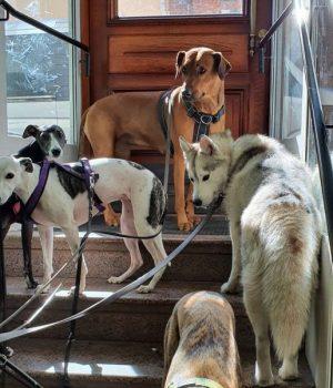 koirahoitola koiraparkki