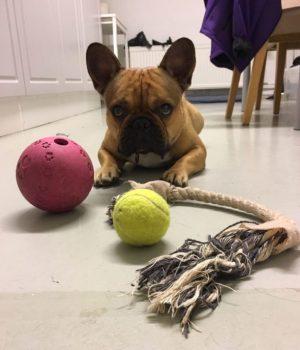 bruce and his balls at koiraparkki.com