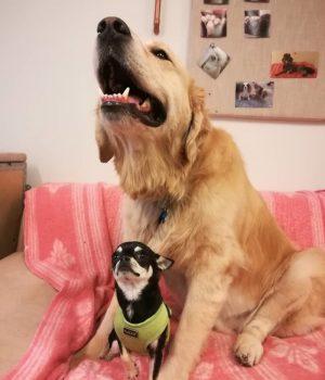isoja ja pieniä koiria koiraparkki.com