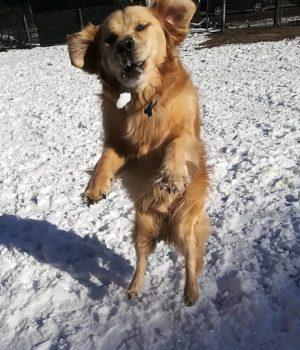 Sammy koirapuistossa koiraparkki.com