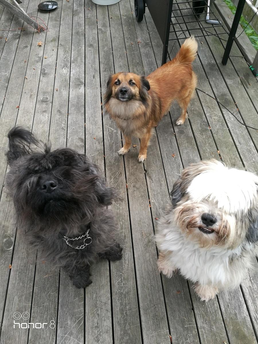 Karma ja Chico koiraparkki.com Espoo