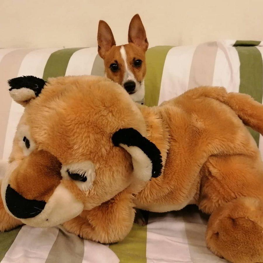 Koirahotelli Perro nukutaan pehmeiden unikavereiden kanssa