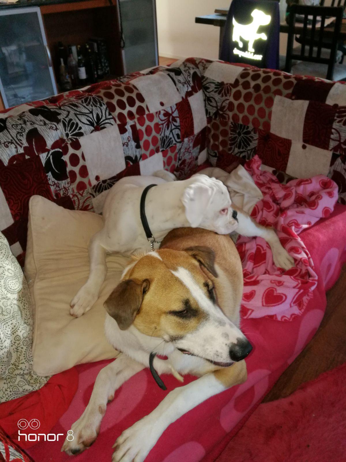 Koirat nukkuvat kimpassa Koirahotelli perro