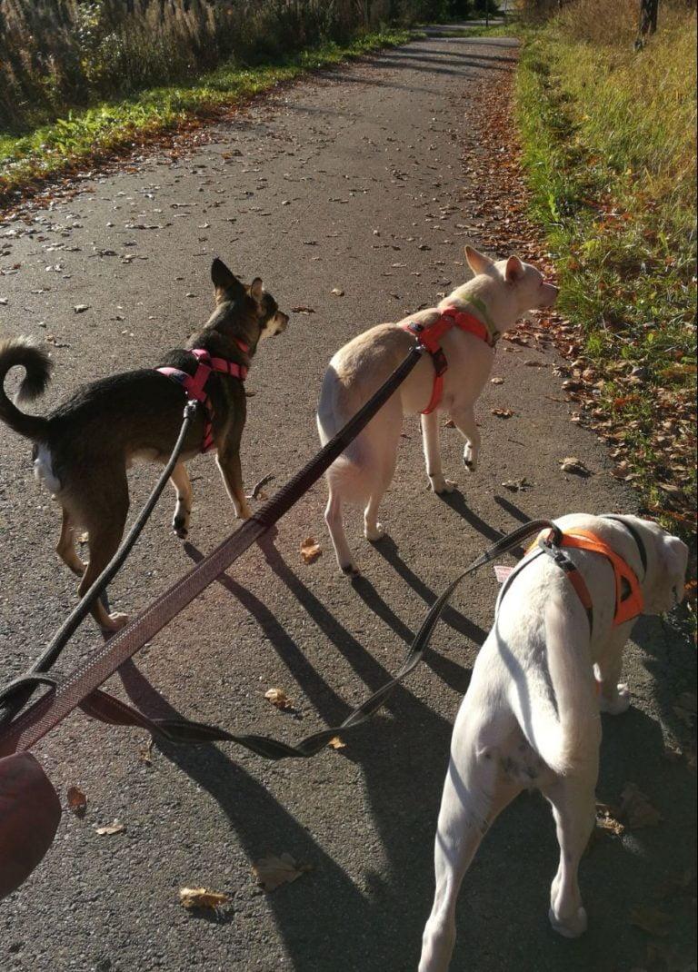 koirahotelli perro lenkille mennään kimpassa