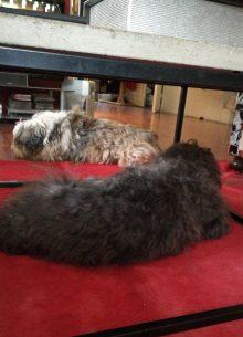 Koirahotelli Perro nukutaan hyvin