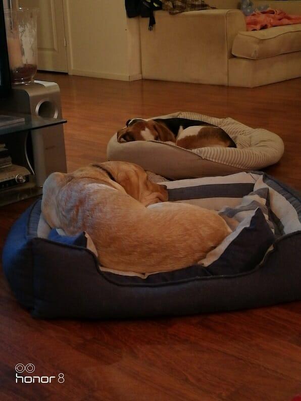 Koirahotelli perro petejä riitää kaiken kokoisille