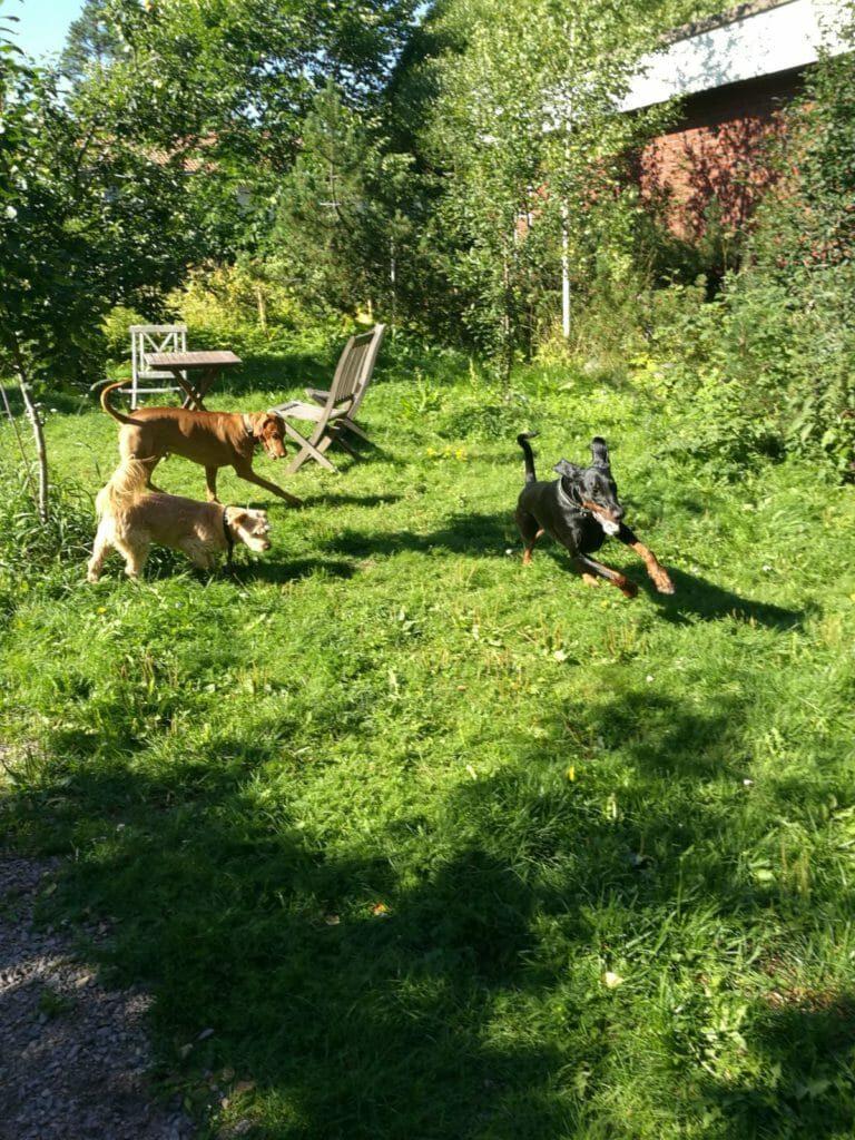 Koirahotelli Perrossa löytyy aina leikkikavereita pihalla