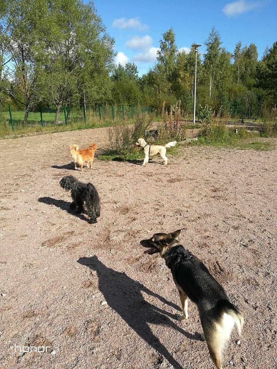 Koirahotelli Perrossa löytyy aina leikkikavereita