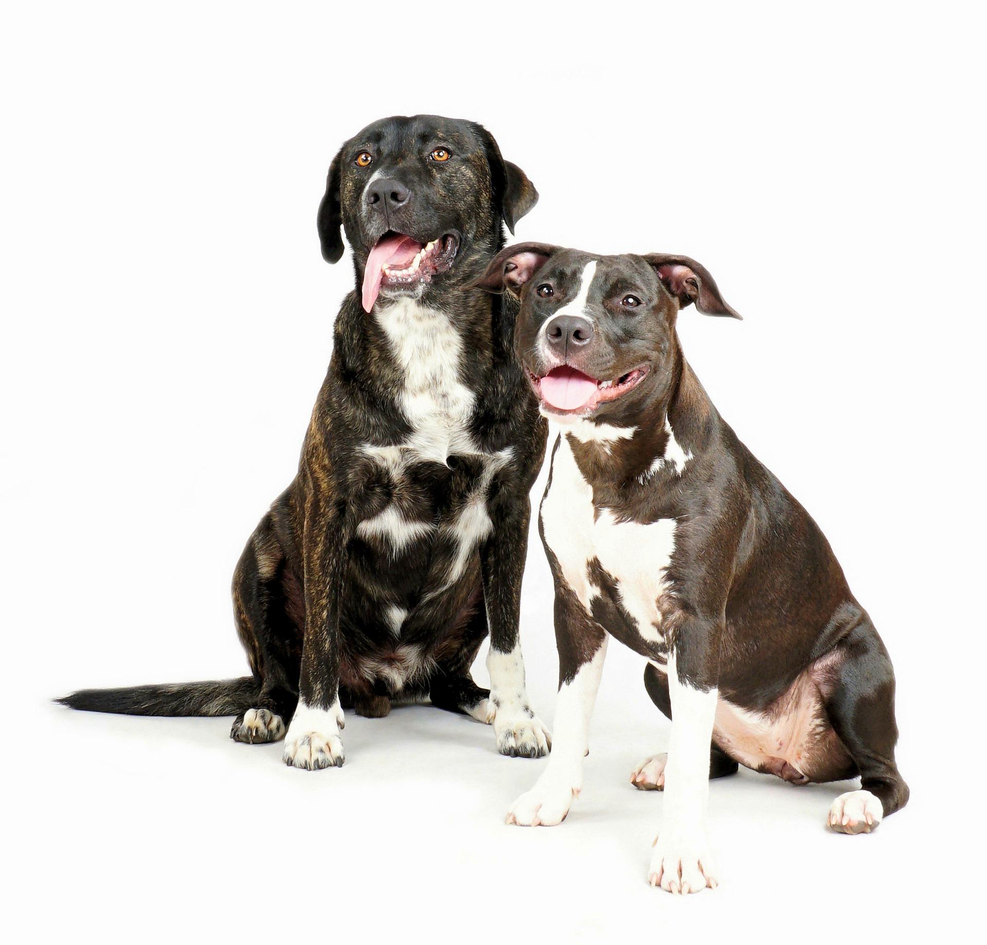 kaksikko koiraparkki.com