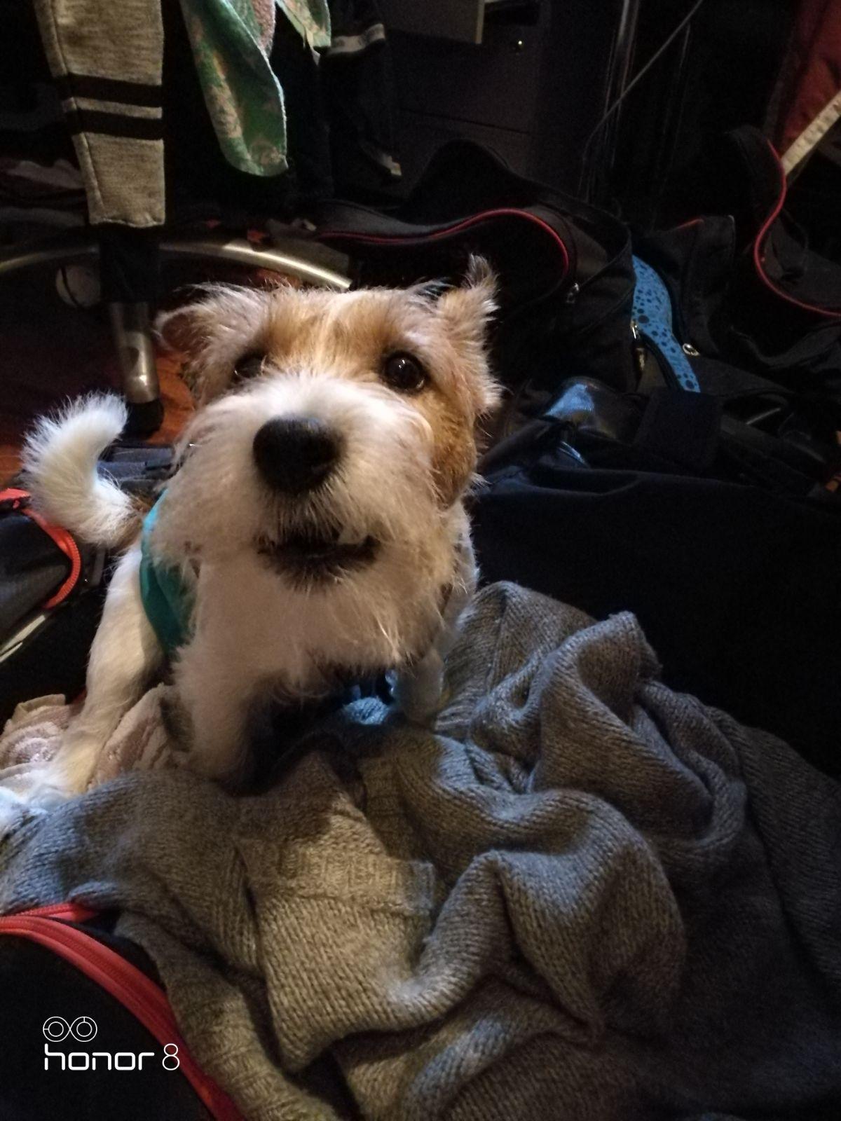 lomahoitoa koirahoitolassa - koirahotelli perro
