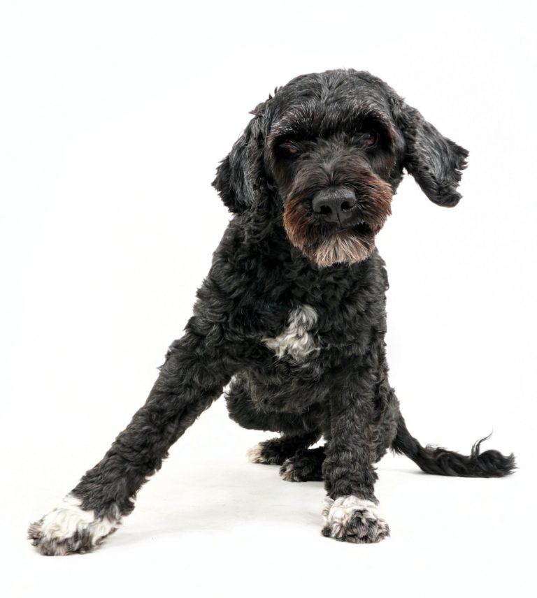 asennetta kuviin koiraparkki.com