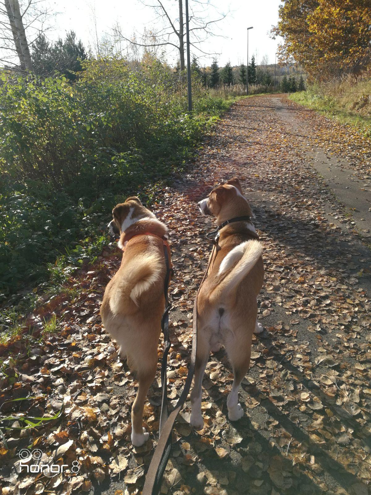 veljekset lomalla koirahoitola koirahotelli perro